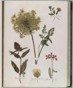 Emily Dickinson, Herbarium, circa 1839-1846