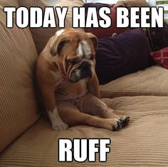 funny animals, bulldog, funny dogs, funny pictures, puppi, dog funnies, friend, true stories, dog memes