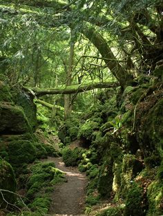 Puzzlewood is an ancient woodland site in the Forest of Dean in Gloucestershire, England. J.R.R. Tolkien used this woodland as inspiration for Lord of the Rings.