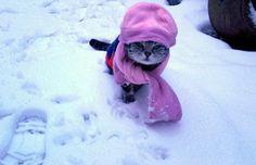 Unhappy kitty