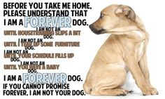 Before you take me home please understand that I am a FOREVER Dog.
