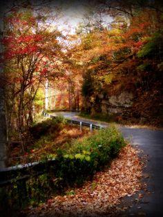 Almost heaven .. West Virginia.   Near  New River Gorge.  Lisa Lambert.
