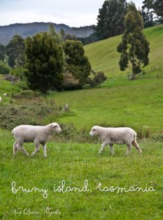Bruny Island- Tasmania.