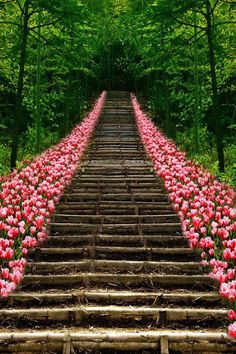 tulip lined wooden stairway