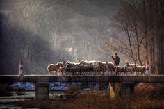 Photography by Sun Xuhui