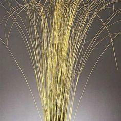 Fountain Grass - Dried Fountain Grasses
