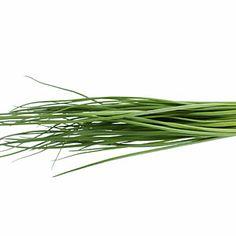 8 Surprising Foods You Can Freeze   Fresh herbs   AllYou.com