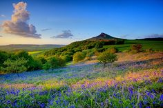 Wildflower field.