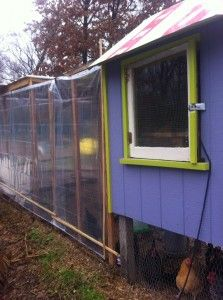 Use clear shower curtains to keep your chickens dry & snow free in the winter