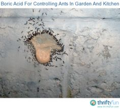 I have a fairly large piece of property. It is mostly sandy loam. Ants seem to prefer this type of soil. At any given time, there may be several thousand ant hills on my land.