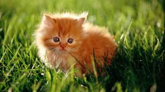 ball, anim, baby kittens, orange cats, oranges