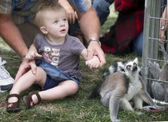 Isabella Trogden, 1, of Canon City, and Linus, a lemur, look up at something interesting at the Colorado State Fair Lemur Land of Madagascar & Exotic Petting Zoo this weekend. (Chieftain photo by Chris McLean, August 2012)