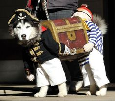 best costume ever! pirate dog