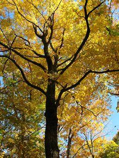 Fall in Door County WI