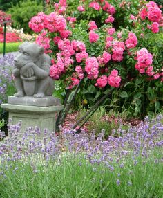 The Thinker among gardens filled with Flower Carpet roses and lavender