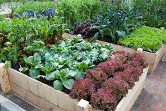 Making Raised Vegetable Garden Beds