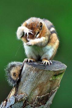 Shy squirrel