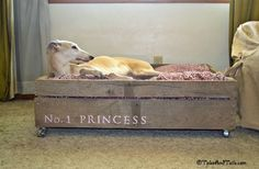 dogbed diy, princess, dog beds, pallet dog, bed idea