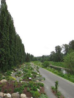 Redmond, WA | Sammamish River Trail