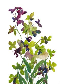 Orchids Watercolor $19.00