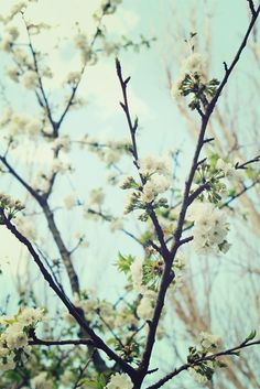 Sukie and Springtime