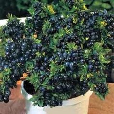 container blueberries