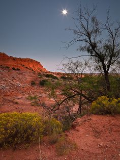 Caprock Canyon State Park, near Quitaque, Texas.  Amazing, beautiful place to camp.  Very remote and peaceful.