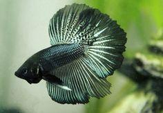 Pretty fish  :)