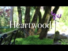 Heartwood: Behind the Scenes - Knit Picks