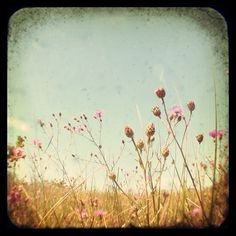 wide open spaces && wildflowers