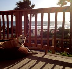 Daisy getting ready to watch the sunset; coastal California.