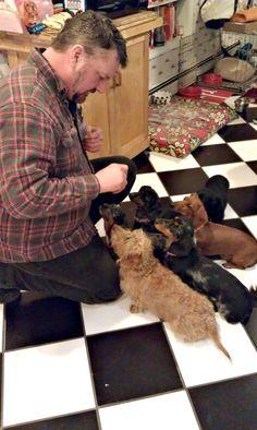 Six out of six Dachshunds like treats