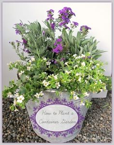 Container garden - a rescue & how to