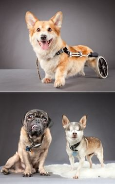 Awww, handicapable pets! #dogs