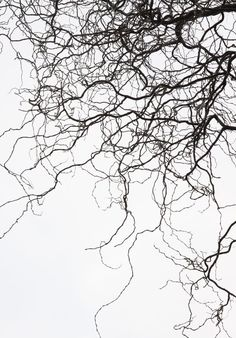 branches tree autumn nature abstract Black & White
