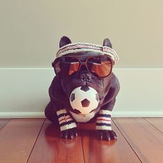 #Hipster french bull dog with the best #instagram #selfies