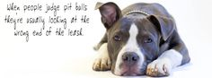 When people judge pit bulls they're usually looking at the wrong end of the leash.