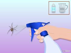 how to get rid of spiders, idea, houses, pest control, clean, bug, trick, diy, thing