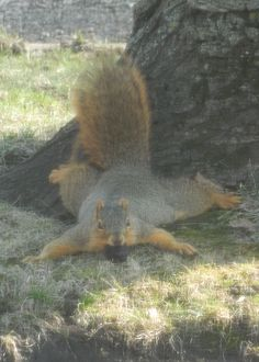Looks just like my fat squirrel Daisy!!  Taken by: Patty Fike