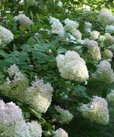 10 Drought-tolerant Shrubs
