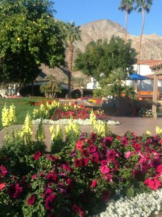 Palm Springs, California USA  Photo by Gretchen Alter aka alterdesigns