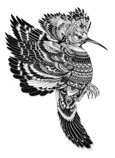 exotic bird  pen and ink  2011  by Iain Macarthur  www.iainmacarthur.carbonmade.com