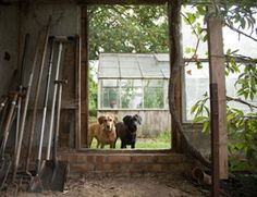 Dog-friendly Yard Work: good ideas for making your backyard a little more dog friendly.