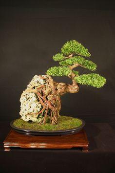 Over Rock bonsai