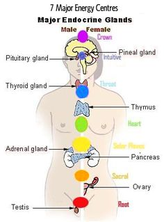 The Seven Major Energy Centres for Males and Females.