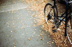 Autumn. Leaf. Bicycle.