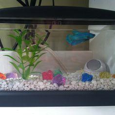 Fish tanks to admire ideas on pinterest betta betta for Fish tank lights walmart