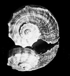 Black and white shell, Bathroom Art, black and white