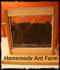 Homemade Ant Farm from ilovemy5kids, a school project plus learn from our mistakes @Lana {ilovemy5kids}