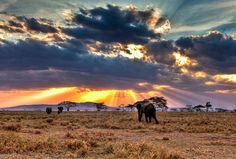 Serengeti National Park, Tanzania - still my absolute number 1 destination in the world.